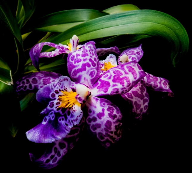 BLOG-Orchid